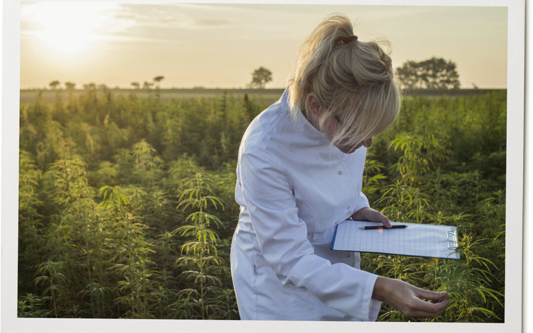 Why is it important to choose an organic CBD product?